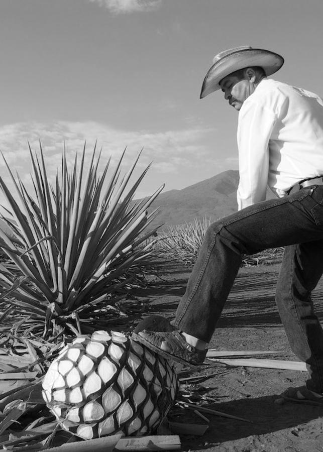 sélection de mezcal et tequila